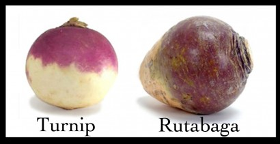 rutabaga vs turnip