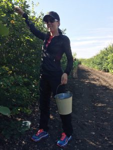Picking berries at a farm