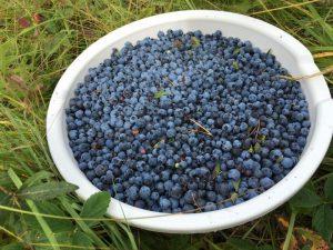 HSN wild blueberry bowl