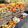 Squash varieties and how to cook them