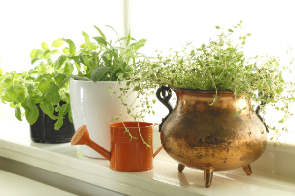 a sunny windowsill with three potted herb plants and a copper watering can