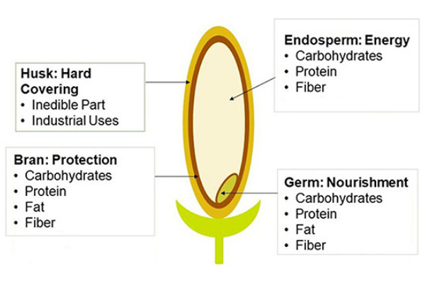 a graphic displaying the parts of a grain of rice