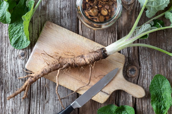 burdock root - looks like a long brown tap root with a white stem on a wooden cutting board with a knife